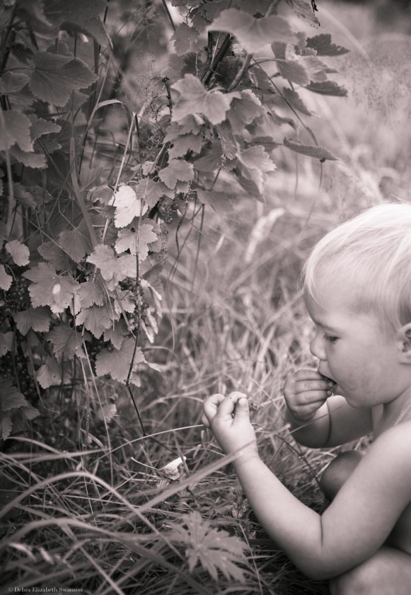 Cora Mae Eating Currants, Mystery Bay Farm, 2011